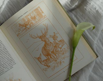 1980s The Edwardian Lady - The Story of Edith Holden, Vintage Book, Illustrated Natural Book, Classic Flora and Fauna Book, Collector Book