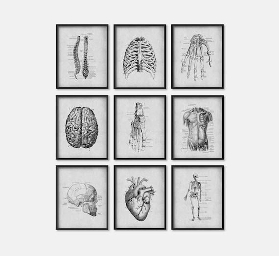 Greys Anatomy Wall Decor : Human anatomy wall art set of nine grey biology