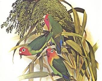 Vintage Original Parrots print dates 1970's tropical birds,decorative art, wall art, hotel art, home decor, Sale item
