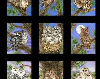 A panel of owls (hooters) cute as can be.