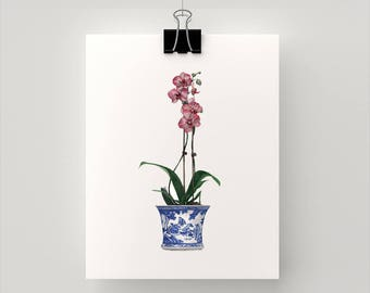 PRINT Pink Phalaenopsis Orchid in a Blue and White pot  - print of my original watercolour paintings