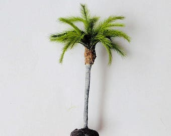 QUEEN PALM for Subtropical Landscaping