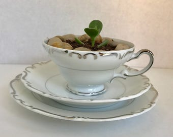 Vintage Ucago china 3 piece tea cup set with succulent home office decor gift easy care plant