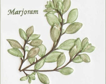 """4 1/4' x 4 1/4"""" Marjoram Herb Tile"""
