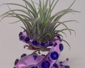 Lavender Tentacle Table top glass airplant terrarium 2.5 x 2.5 x 1.75 in