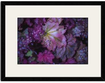 Purple Glowing Leaves