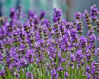 Lavender/Natural Soy Wax Melts