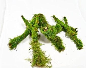 10 thick branches with live moss , Terrarium decor, Live decor, vivarium, floral decor, fairy garden, moss covered sticks, Ecofriendly decor