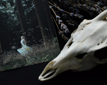 Forest Muse - Print / Postcard