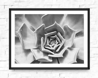 Succulent art print, Photography wall art, Black and white, Botanical art, Bathroom picture, Succulent wall decor, Cactus, Modern artwork