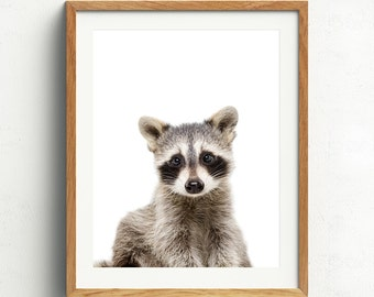 Raccoon Print, Raccoon Art, Nursery Art, Baby Raccoon, Woodland Nursery
