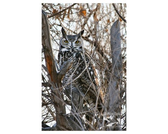 Great Horned Owl – Wildlife, Animal, Nature, Outdoor, Owl, Bird, Photograph, Home Décor, Wall Art, Picture, Prints, Canvas – Alberta, Canada