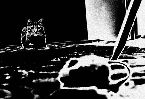 "Cat Picture. Monochromatic Black Tabby Cat Art Print. Modern Cat Artwork. Enhanced Photograph ""Cat and Mouse"". Cat Portrait Wall Art."