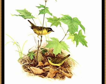 """Prairie Warbler painted by J F Landsdowne for the book Birds of the Eastern Forest 2. The page is approx. 9 1/2"""" wide and 13"""" tall."""