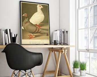 Pigeons Antique Print| Pigeon Art| Vintage Pigeon Print| Pigeon Wall Art| Natural Art| Affiche Oiseau| Birds Wall Art Print| HAP032
