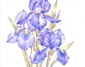 Watercolour Painting 'IRIS' Flower Art Card, Handmade Original Watercolour Printed Flower Art Card, Original Greeting Card, Blank Art Card
