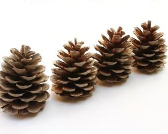 Pine cones 4 large pieces rustic wedding decor christmas natural craft wood branch supplies reclaimed art DIY organic creations vegan M1