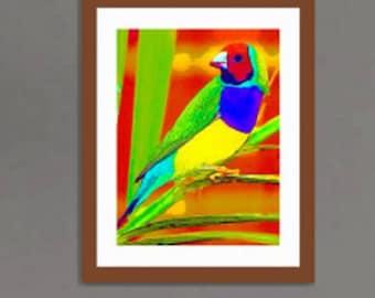 16 x 20 in. giclée- Rainbow Finch