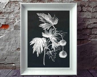 Antique Botanical Print, Botanical Print, Chalkboard Botanical, Farmhouse Decor, Chalkboard Art, Printable Art, Instant Download