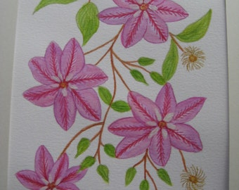 Trailing Clematis.