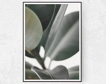 Botanical Print, Plant Photography, Scandinavian Wall Art, Modern Wall Decor, Leaf Print, Minimalist Poster, Instant Download, Botanical Art