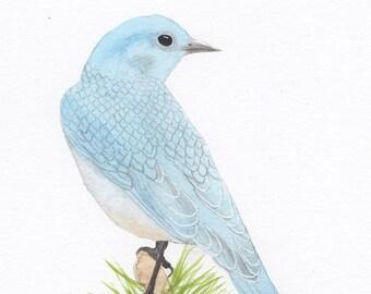 Bluebird watercolor, mountain bluebird on pine, art print, original watercolor painting, art print, home decor, wall art, nature art