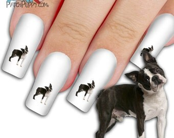 """Boston Terrier """"What Did I Do Ma""""  Nail Art Kit - Dog Nail Decals - Waterslide Nail Decals - Boston Terrier Nail Decals"""
