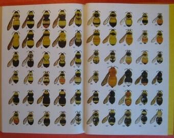 Bumblebee Economics by Bernd Heinrich