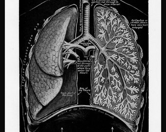 Anatomy LUNGS Breath Vintage Collectible Medical Print Home Living Wall Decor Art Graphics Diagram Illustration 1942 Wall Hanging