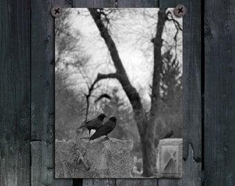 Black And White, Crows, Ravens, Rooks, Birds, Blackbirds, Gothic Wall Art, Graveyard, Monochrome Print - Where Crows Meet