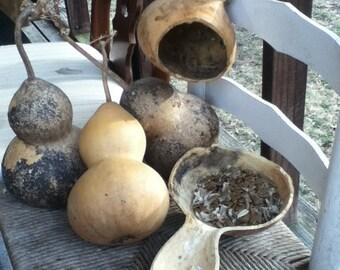 15 Birdhouse Gourd Seeds