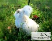 Cruelty Free Angora Spinning Fiber Chocolate Agouti English Angora Rabbit Wool Fur Raw Multicolored Hair Fibers from Sky Dancer / 1 Ounce