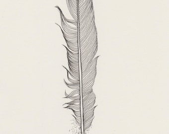 Black feather -- original ink drawing