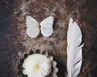 White Butterfly 2 ~ photo print