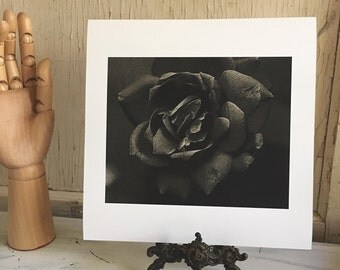 Rose - fine art photography print black and white 10x10