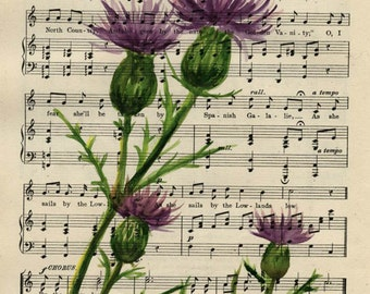 "Thistle, Scotland,  Original watercolor,  on antique book page - The British Student Song Book 10"" x 7"""