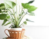 woven wicker teacup with handle / basket planter