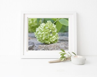 Hydrangea print, Floral Wall Art, Cottage Chic Flower Photography, Botanical Photo, Greenery, Large Photograph, Shabby Chic Art, Wall Decor