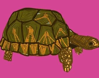 Print: Radius Tortoise on pink