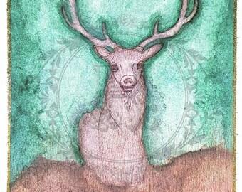 """Original Watercolor """"Murray"""" Painting - 4x6 Deer Postcard"""