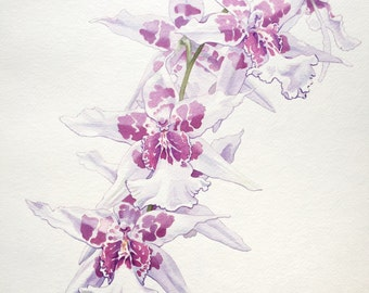 Original Orchid Watercolor Painting