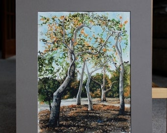 An original watercolor of a couple of peaceful Sycamore Trees