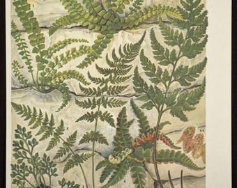 Wall Fern Print Ferns Wall Art Plant Print Nature Print