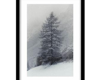 tirol art, black and white tirol photography, black and white tree photography, tree picture, black and white photography prints, nature art