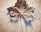 Leaf Art, Autumn Leaves, ...