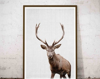 Deer Antlers Decor, Wilderness Wall Art, Rustic Hunting Decor, Black and White Animal Photo, Rustic Antlers Print, Instant Digital Download