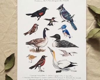Poster of the North American bird identification