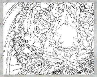 """Panthera Tigris Sumatrae   Sumatran Series   8""""x10"""" Print"""
