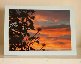 Greetings Card: Sunset Silhouette