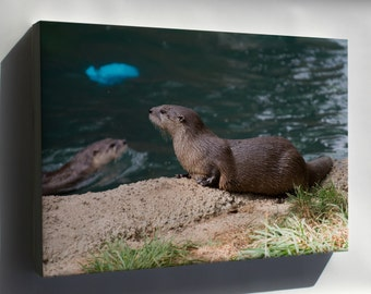 Canvas 24x36; North American River Otter (Lontra Canadensis)